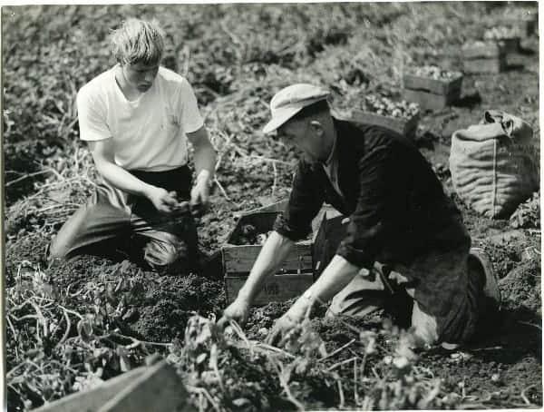 Een dag van een boerenzoon (1954)