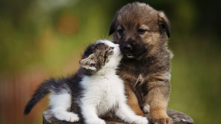 Huisdierenvreugde